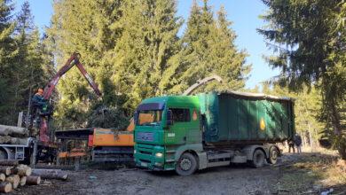 Дрвна биомаса – ЕНЕРГЕНТ БУДУЋНОСТИ